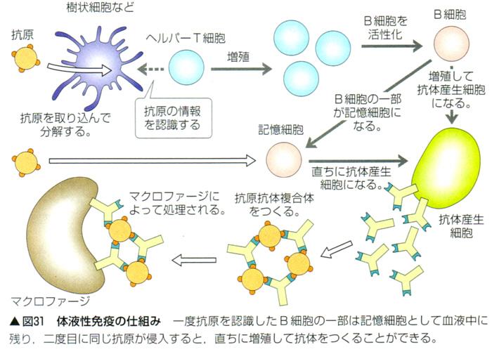 生物基礎 免疫
