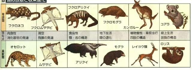 高校生物:進化の証拠